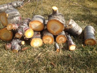 Cherry Tree Chopped up for Fire Wood