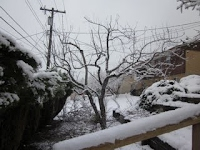 Bountiful Utah Apple Tree After Pruning