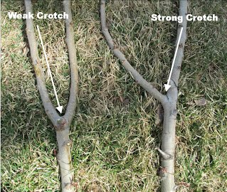 Fruit Tree Pruning Education