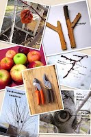 Salt Lake City Fruit Tree Pruning Service